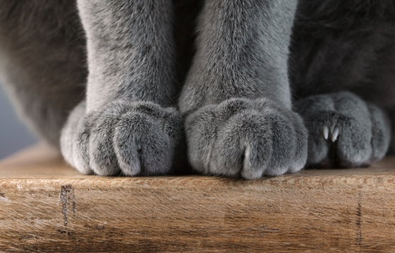 Detail shot of a cat's paw, by Nailia Schwarz.